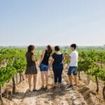 winery wine tasting tour vineyards Pares Balta